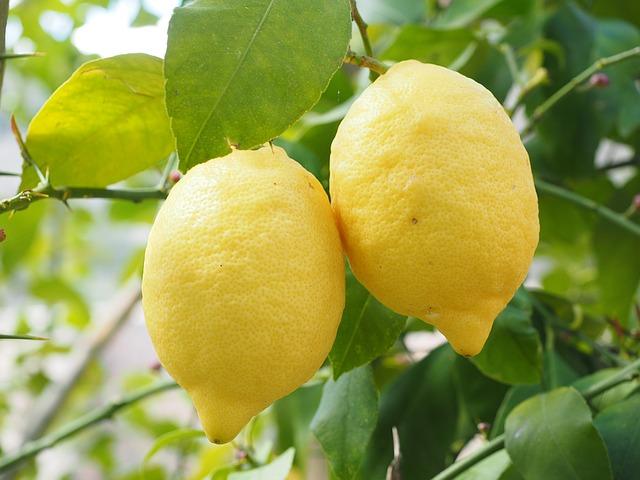 レモンのスポンジケーキ大好評です!水曜日は製造直売
