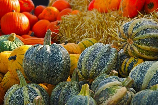 秋限定のドーナツぞくぞく登場、本日はカボチャ!